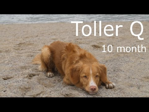 Toller Quentin - tricks! 10 month