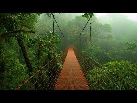 Top 10 Secret Places Of Amazon Rainforest Youtube