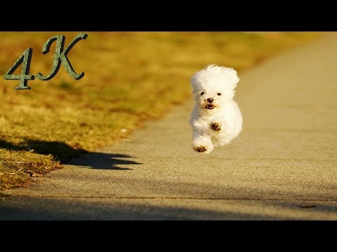 Puppy Race 4K (Demo) - 4K Central