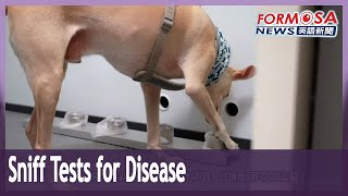 Experts trial dogs and robots as disease detectors
