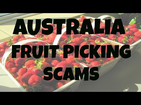 FRUIT PICKING SCAMS IN AUSTRALIA! BACKPACKERS BEWARE!