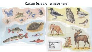 """Окружающий мир 1 класс ч.1, тема урока """"Какие бывают животные"""", с.42-43, Перспектива"""