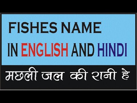 FISHES NAME IN ENGLISH AND HINDI| FISHES NAME VIDEO FOR KIDS|