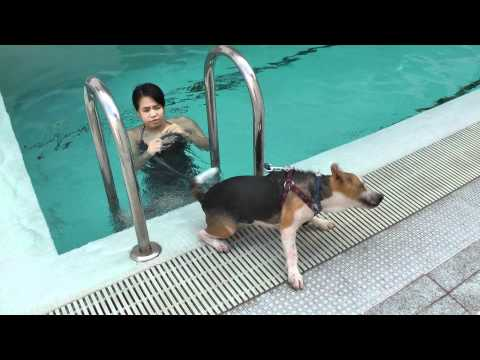 General Swimming 17102011 - Part 6