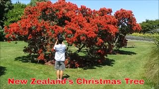 Auckland Travel Guide, New Zealand
