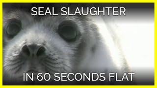 Seal Slaughter in 60 Seconds Flat