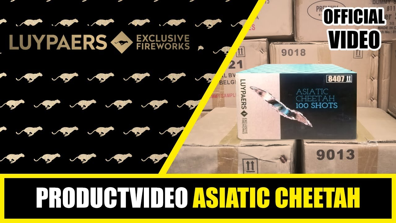PRODUCT VIDEO | LUYPAERS | ASIATIC CHEETAH | 8407 (2020 BATCH)