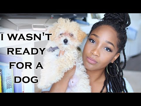 I Wasnt Ready For a Dog | Tips for New Puppy Owners + New Puppy Must Haves