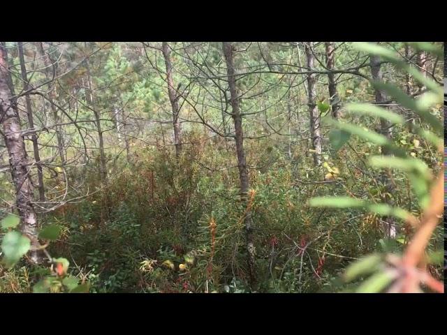 Filosofía en el bosque 35. Patrones 4.