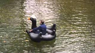 Two Black Swans - Steve Almaas