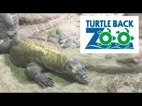 Turtle Back Zoo Trip!