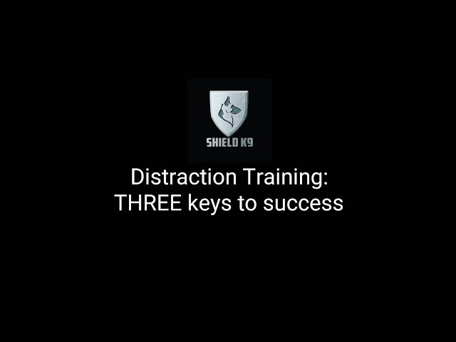 DISTRACTION Training - Teach your dog to ignore distractions