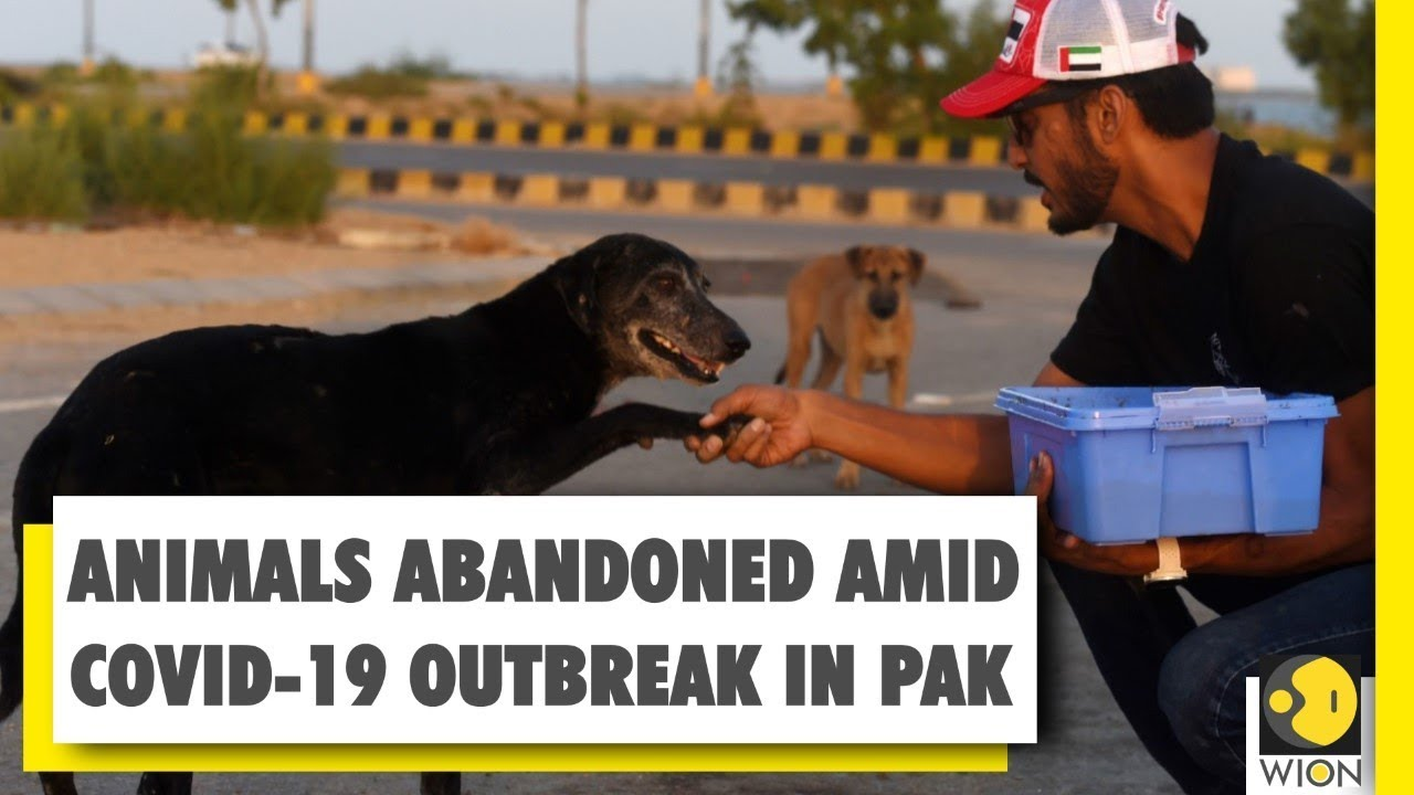 Animals starve to death in pet markets due to COVID-19 outbreak in Pakistan | Coronavirus