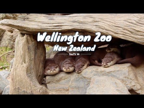 Wellington Zoo | New Zealand Attractions [Full HD]