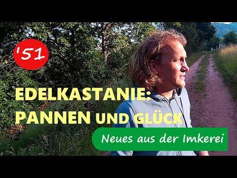 Wanderung Edelkastanien: Nicht Alles Lief Rund - Neues Aus Der Imkerei #51