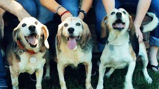 14年間、実験動物だったビーグル3匹 初めて自由を得た姿に、心うたれ...
