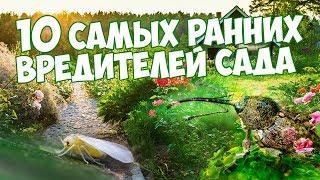 видео Вредители плодового сада