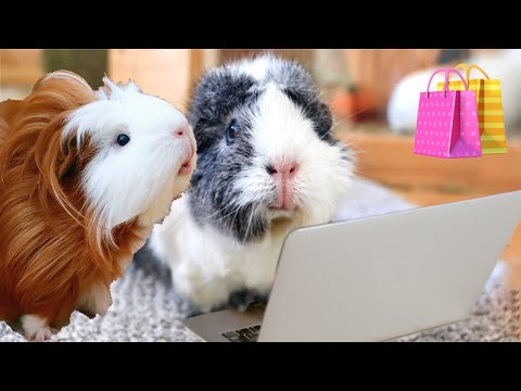 Buying My Guinea Pigs Everything They Pick!