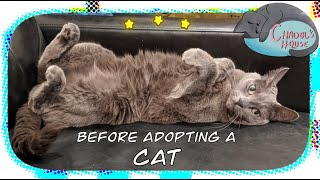 What to consider before you adopting a cat  Chadol's House (Korat)