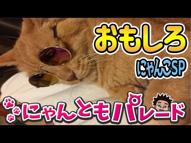 【愉快な猫】おもしろねこSP〜にゃんともパレード〜