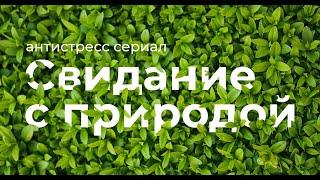 Эпизод 10  Цветы Телеканал Живая природа