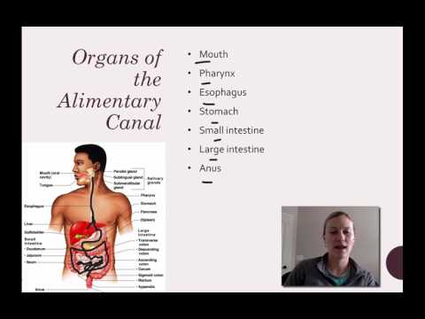 031 Organs of Alimentary canal 1