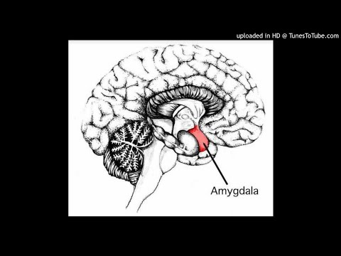 Social Play Behaviour : The Anterior Cingulate Cortex, Infralimbic Cortex, Basolateral Amygdala Or H