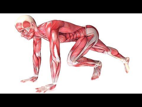 Это Заставит Мышцы Расти! Узнай 10 Главных Факторов
