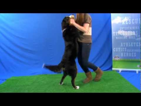 Dog Dances the Cha Cha for Talent Hounds