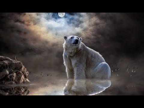 К чему снится медведь - Толкование в известных Сонниках