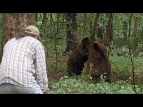 The Bears' Erratic Behavior May Put Jeff In Danger | Project Grizzly