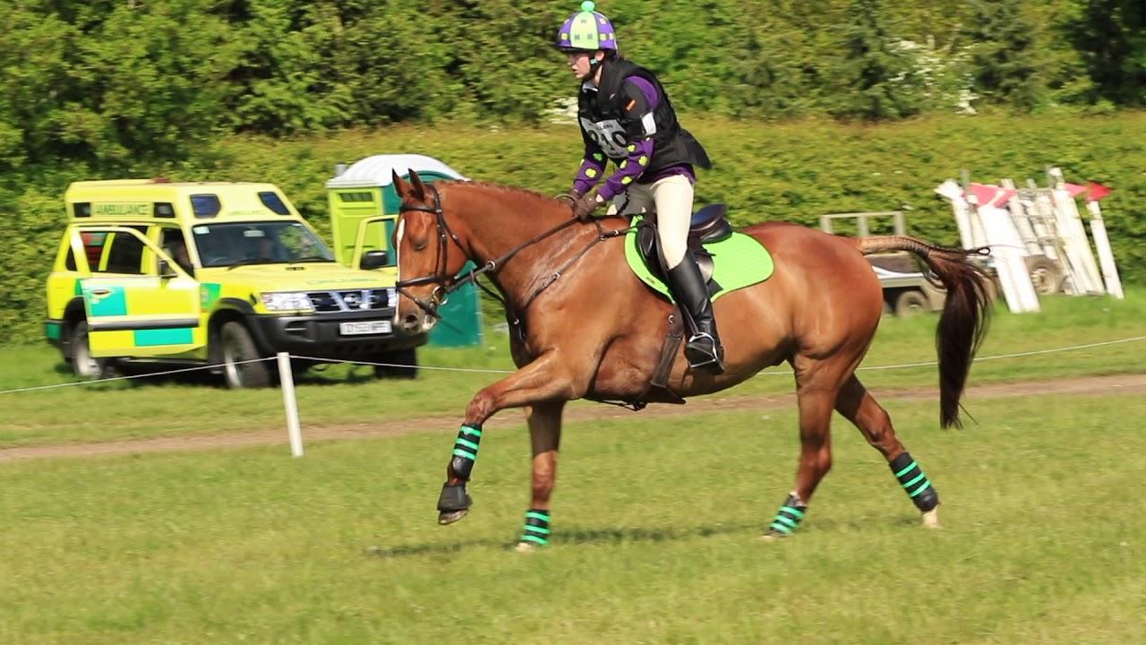 Fibre-Beet Festival of the Horse | British Horse Society