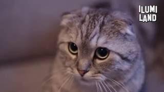 Привет, я кот!   ilumiLand