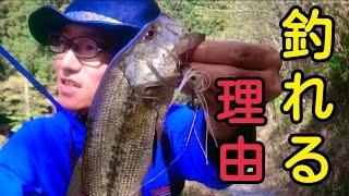 バス釣り 野池をスピナーベイトで攻める!釣れる理由をぶっちゃけるよ! thumbnail
