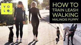 HOW TO LEASH WALK YOUR BELGIAN MALINOIS | STOP LEASH PULLING | YOLO PUP LA