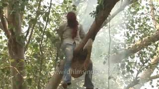 The Honey hunters of India