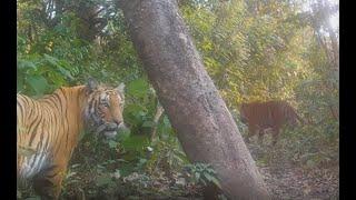 Uskomaton määrä lajeja tallentui piilokameroihin Nepalissa