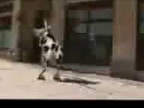 коровы — новые прикольные фото, анекдоты, видео, посты на
