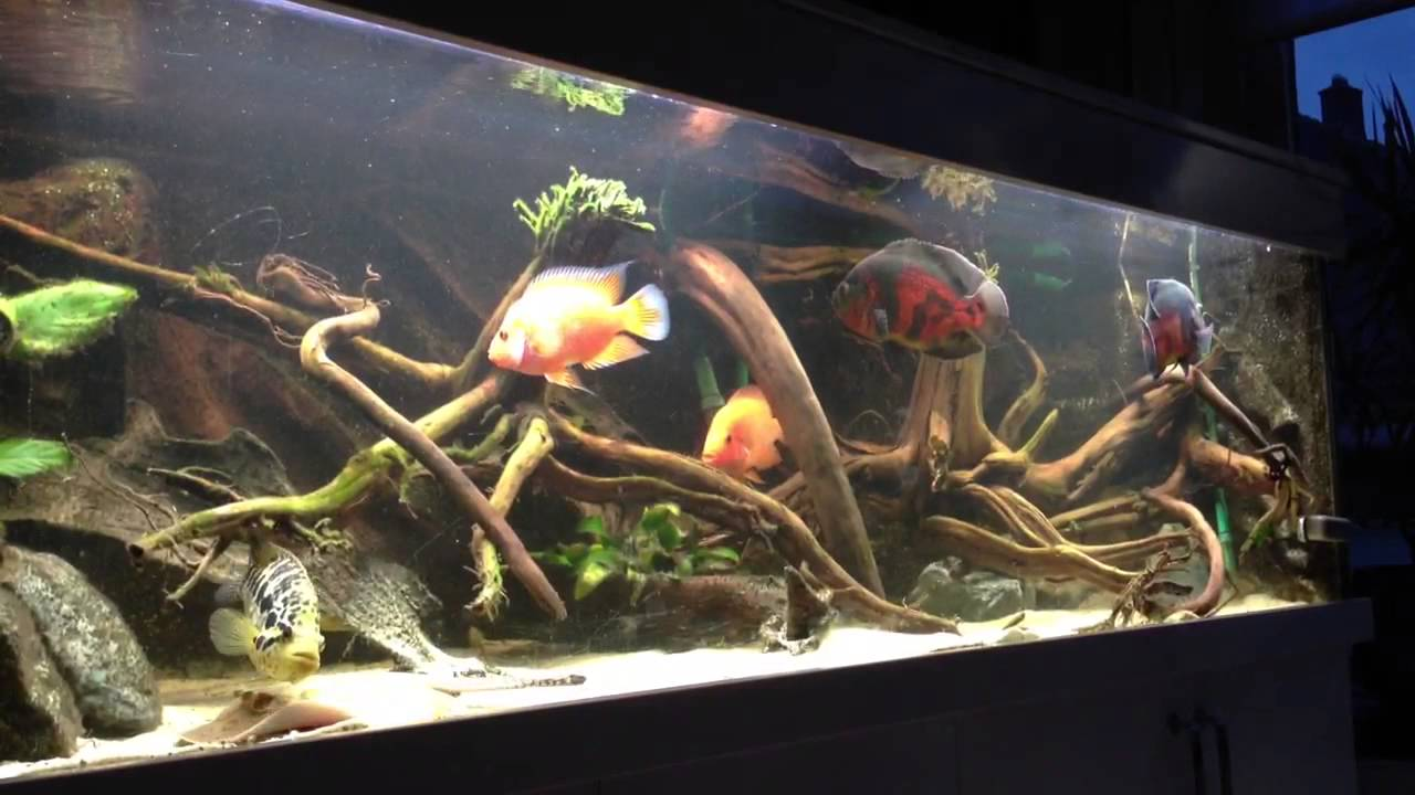 Decor Arriere Aquarium