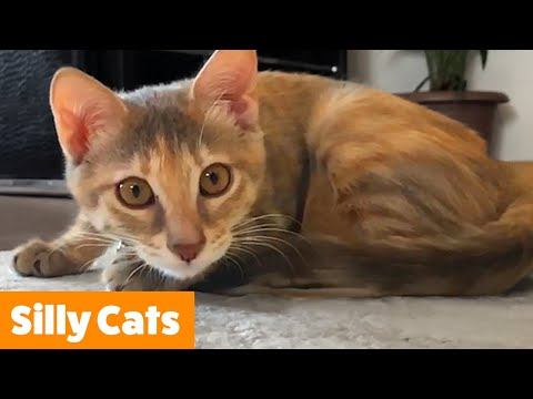 Cute Cat Bloopers & Reactions | Funny Pet Videos
