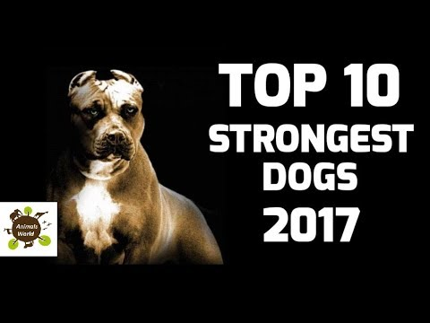 Animals World Strongest Ten Dogs Breed in World  - HD Record