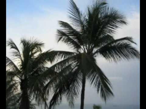 Robert Plant  Amsterdam 29 Palms