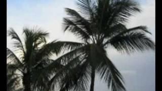 robert plant live amsterdam 29 palms