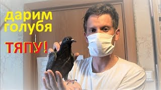 Дарим голубя Тяпу