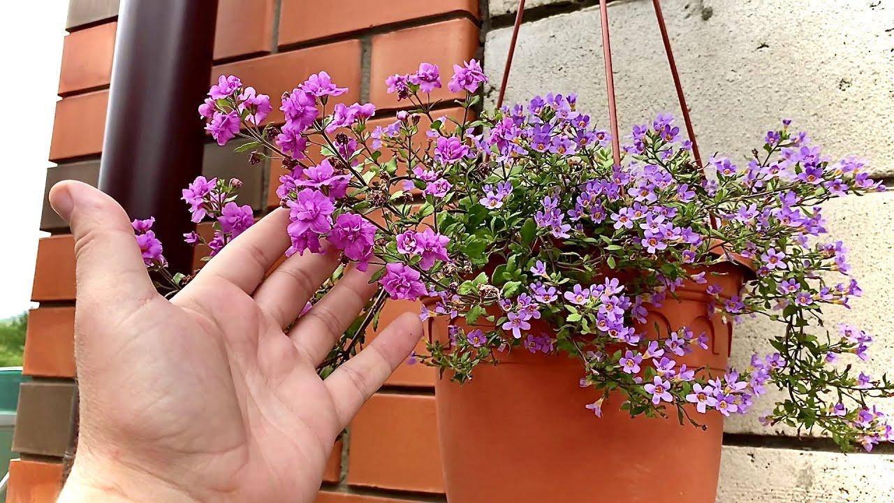 """обзор с """"ХВОСТАМИ"""" что цветёт у ПАПЫ в клумбах"""