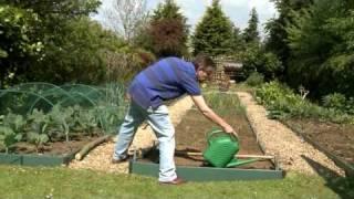 Kitchen Garden magazine: Sowing Carrots