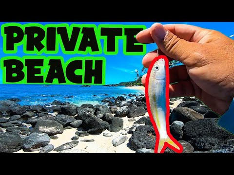 Live Bait Does The Trick | Shoreline Fishing In Hawaii | Hawaii Fishing | Omilu Papio | Oama Bait