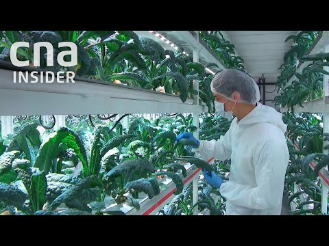 How Singapore Farms Use Artificial Intelligence