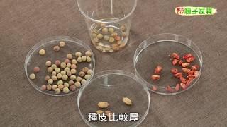 種子盆栽DIY教學 - 種子催芽