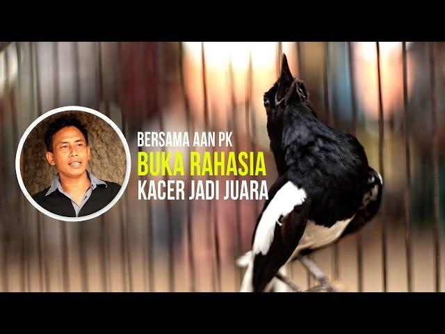 Buka Rahasia Kacer Jadi Juara Video Media Ronggolawe